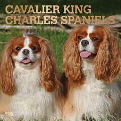 Cavalier King Charles Spaniels 2019 Square Foil CAL 2019-CAVALIER KING CHARLES [ Inc Browntrout Publishers ][楽天ブックス]