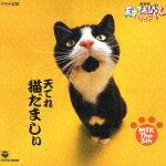 【送料無料】NHK 天才てれびくんワイド 天てれ猫だましぃ MTK The 5th