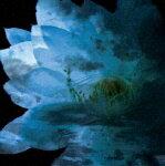 【送料無料】LUNA SEA MEMORIAL COVER ALBUM -Re:birth-