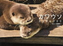 カワウソ/佐藤淳一【1000円以上送料無料】
