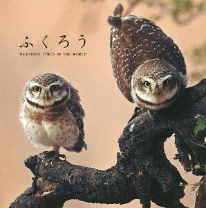 ふくろう BEAUTIFUL OWLS IN THE WORLD【後払いOK】【1000円以上…