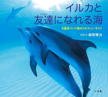 イルカと友達になれる海 大西洋バハマ国のドルフィン・サイト/越智隆治【1000円以上送料無料】