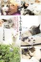 もふもふ猫まみれ とよたさんちのマブ猫22のハッピールール/とよた真帆【1000円以上送料無料】