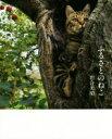 【中古】 写真集 ふるさとのねこ 津軽の四季、子ネコたちの物語。 /岩合光昭(著