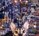 ロック・ポップス, その他  CATALOGUE 19872016ABluray Disc4SHMCD BUCKTICK afb