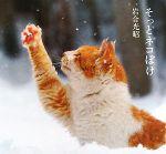 【中古】 そっとネコぼけ /岩合光昭【写真・文】 【中古】afb