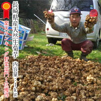 菊芋キクイモきくいも長崎県産野菜健康野菜無農薬無添加腸内フローラ
