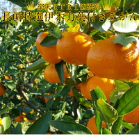 フルーツ・果物/ギフト/葉付きミカン/葉付きみかん/みかん6kg/ミカン/大玉/食品