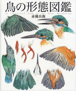 鳥の形態図鑑/赤勘兵衛