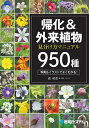 帰化&外来植物見分け方マニュアル950種 瞬時に同定できる/