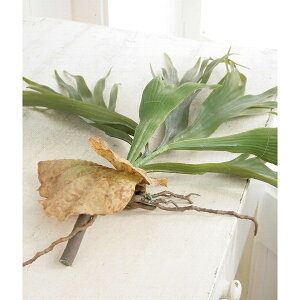 【VU-12】□【OR7】スタッグホーン【コベントガーデンCOVENTGARDENオブジェ置物造花グリーン葉観葉植物フェイクグリーンディスプレイ】