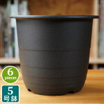 5号FRプラスチック鉢(6個セット)ブラックプラスチック鉢5号鉢実生育苗多肉植物サボテンタニサボ