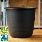 6.5号FRプラスチック鉢(11個セット)ブラックプラスチック鉢6.5号鉢実生育苗多肉植物サボテンタニサボ