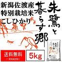 米 10kg 佐渡産 こしひかり コシヒカリ 特別栽培米 5kg×2袋 令和2年産 本州送料無料