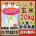 無農薬 『ササニシキ 玄米 20kg 』 自然栽培【新米】2...