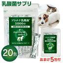 【メール送料無料!】 犬 猫 乳酸菌 サプリメントプラチナ乳...