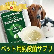 サプリメントプラチナ ペットサプリ アレルギー フェレット