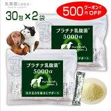 ペット サプリ 犬 猫 乳酸菌 プラチナ乳酸菌5000α(30包×2)