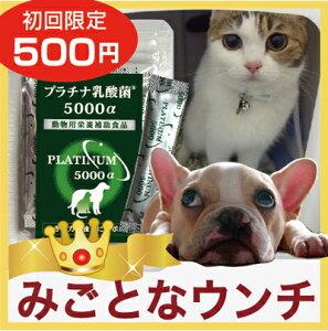 【メール便対応・送料無料】(犬猫用乳酸菌)病気に負けないからだづくりに!免疫調整とおなかの健康をしっかりサポートします。