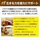 乳酸菌 ペット 健康 免活 サプリ プラチナ乳酸菌5000α(20包入)【犬 猫 うさぎ フェレット 老犬 老猫 】 2