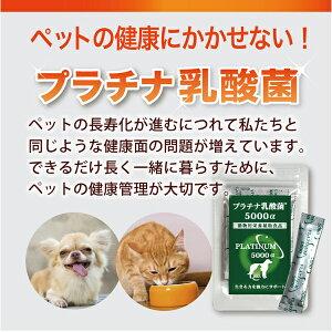 乳酸菌サプリメント/犬/猫/ペット/便秘