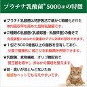 乳酸菌 ペット 健康 免活 サプリ プラチナ乳酸菌5000α(20包入)【犬 猫 うさぎ フェレット 老犬 老猫 】 3