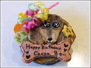 食いしんぼう バースデイセット ワンコケーキ プレゼント