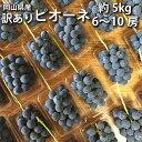 【訳あり】ピオーネ 5kg 簡易梱包 6~10房 ご家庭用【2021年産予約・発送9月中旬~】