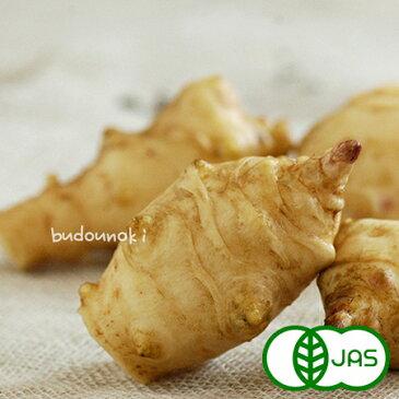 [有機栽培] 菊芋(400g)