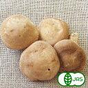 おいしい人参のぶどうの木で買える「[有機栽培] 生しいたけ (100g」の画像です。価格は381円になります。