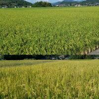 特別栽培米おてんとそだち3kg有機BUIK肥料で育てた栄養満点安心・安全のお米