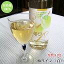 紀州南高梅100%・富田川の伏流水使用梅ワイン(白)中甘口720ml 化粧箱入<アルコール度数11度>紀州産