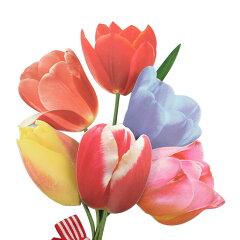 【メール便対応可】みんなの想いが伝わるカードグリーティングライフ Greeting Life Inc. メッ...
