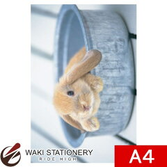 セール!通常定価より10%OFF!リヒトラブ クリヤーホルダー A4サイズ ウサギ F3400-15 / 5セット