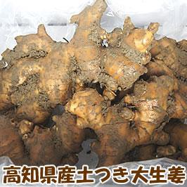 高知県産土付き大しょうが4キロ【生姜・ショウガ】