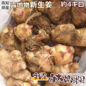 採れたて!高知県産ショウガ土付き新生姜約4キロ
