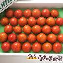 高知産特選 フルーツトマト大箱約28〜32個入【 ギフト 】【クール便】
