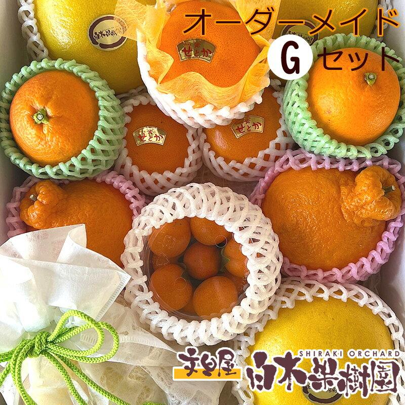 白木果樹園旬のオーダーメイドフルーツ詰め合わせ【Gセット】
