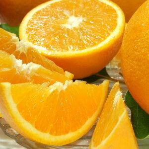 武内さんちのバレンシアオレンジご家庭用 サイズ混合5kg有田郡吉備町奥(おき)地区から