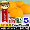 紀州有田産八朔/ハッサク【秀品】(不選別・買得品5kg)