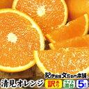 訳あり春柑橘 『清見オレンジ』5kg【送料無料】紀州有田の春
