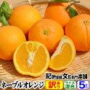 ネーブルオレンジ約5kg/サイズ選別なし訳あり果実【送料無料】紀州和歌山有田地方から「春かんきつ」見た目良くないワケアリ果実