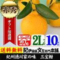 紀州湯浅三宝柑(葉付き)【2L/10kg】約45個入【予約品】