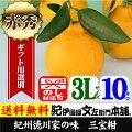 紀州湯浅三宝柑(葉付き)【3L/10kg】約36個入