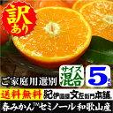 わけあり春かんきつ『セミノールオレンジ』【送料無料】和歌山県産・紀州有田産 【キズ】(買得品5kg)ご家庭用・果汁(ジュース)たっぷりの濃厚柑橘を産地直送