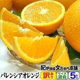 【送料無料】バレンシアオレンジ(買得品5kg)ご家庭用・紀州有田産 わけあり柑橘・訳あり お試し セット