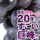 巨峰ぶどう 2kg(露地栽培)完熟果実