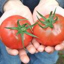 今ならお試しモニター価格!井口さんちのプレミアム「フルーツトマト」高糖度の小粒サイズ【Sサ...