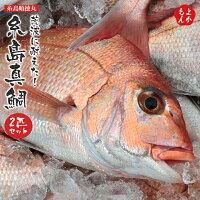 荒波に耐えた!糸島真鯛2匹セット【送料無料】