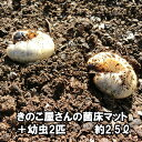 きのこ屋さんの菌床マット(カブトムシの幼虫2匹付き)昆虫マット 約2.5リットル【送料無料】【無農薬】